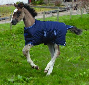 Ponny/Föl